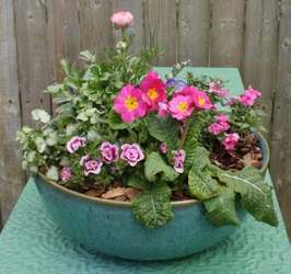 12 Inch Ceramic Bowl from Mischler's Florist and Greenhouses in Williamsville, NY