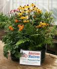 Go Garden American Natives from Mischler's Florist and Greenhouses in Williamsville, NY