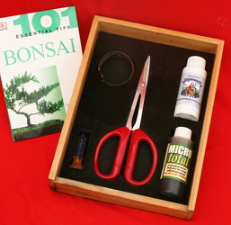 Bonsai Starter Kit from Mischler's Florist and Greenhouses in Williamsville, NY
