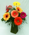 Brite Color Gerbera Daze from Mischler's Florist and Greenhouses in Williamsville, NY