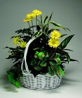 Basket Planter from Mischler's Florist and Greenhouses in Williamsville, NY