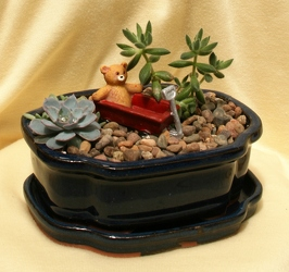 Mini Succulent Garden - Bundle of Joy from Mischler's Florist and Greenhouses in Williamsville, NY