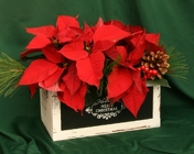 Christmas Crate Double from Mischler's Florist and Greenhouses in Williamsville, NY