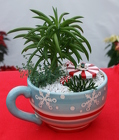 Cup O' Christmas from Mischler's Florist and Greenhouses in Williamsville, NY
