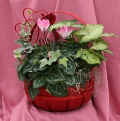 Cyclamen Medium Handle Basket
