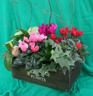 Cyclamen Box from Mischler's Florist and Greenhouses in Williamsville, NY