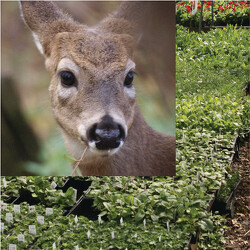 Gardens To Go - Deer Resistant from Mischler's Florist and Greenhouses in Williamsville, NY
