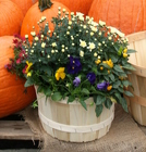 Fall 8 Qt. Basket Mix from Mischler's Florist and Greenhouses in Williamsville, NY