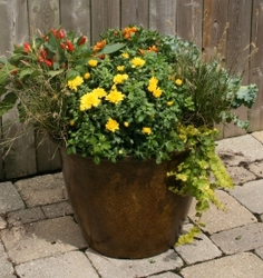 Patio Pot - Fall Annuals