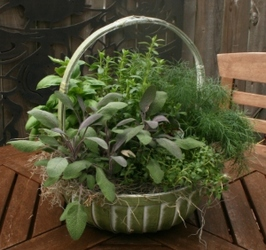 Herb Basket from Mischler's Florist and Greenhouses in Williamsville, NY