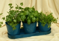 Herb Trio from Mischler's Florist and Greenhouses in Williamsville, NY