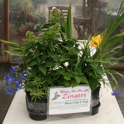 Go Gardens Hmmm Zingers from Mischler's Florist and Greenhouses in Williamsville, NY