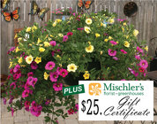Hanging Basket & $25. Gift Cert. from Mischler's Florist and Greenhouses in Williamsville, NY