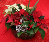 Holiday Tin Mix from Mischler's Florist and Greenhouses in Williamsville, NY