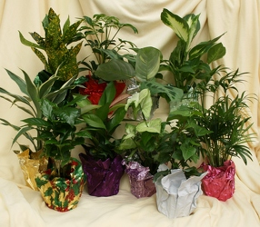 Houseplant Favors from Mischler's Florist and Greenhouses in Williamsville, NY