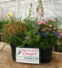 Hummm Zingers from Mischler's Florist and Greenhouses in Williamsville, NY