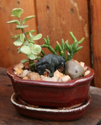 Mini Succulant Lil' Buffalo from Mischler's Florist and Greenhouses in Williamsville, NY