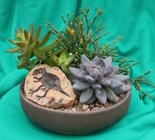 Fossilized Succulent Garden from Mischler's Florist and Greenhouses in Williamsville, NY
