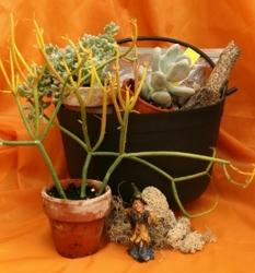 Mini Garden Kit - Spooky Succulents