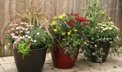 Fall Mix Patio Pot from Mischler's Florist and Greenhouses in Williamsville, NY