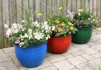 Decorative Patio Pot from Mischler's Florist and Greenhouses in Williamsville, NY