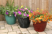 Patio Pot - Summer Annuals from Mischler's Florist and Greenhouses in Williamsville, NY