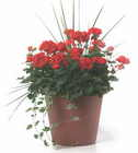 Traditional Patio Container from Mischler's Florist and Greenhouses in Williamsville, NY
