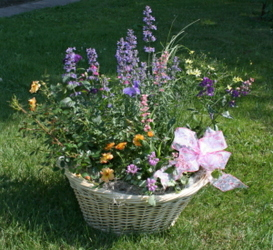 Basket of Perennials