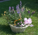 Basket of Perennials from Mischler's Florist and Greenhouses in Williamsville, NY