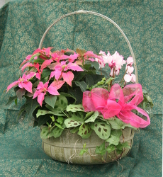 Princettia Combo Basket from Mischler's Florist and Greenhouses in Williamsville, NY