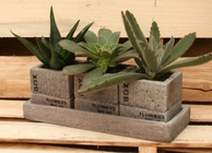 Succulent Crate Trio from Mischler's Florist and Greenhouses in Williamsville, NY