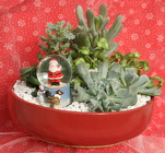 Succulent Mini Garden Santa Snow globe from Mischler's Florist and Greenhouses in Williamsville, NY