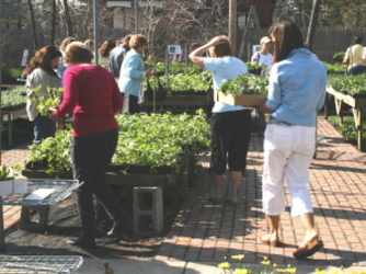 59 Cent Perennial Sale from Mischler's Florist and Greenhouses in Williamsville, NY