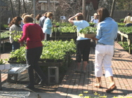 49 Cent Perennial Sale from Mischler's Florist and Greenhouses in Williamsville, NY