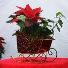 Sleightime from Mischler's Florist and Greenhouses in Williamsville, NY