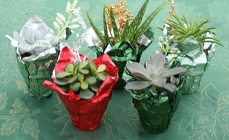 Succulent Party Favors from Mischler's Florist and Greenhouses in Williamsville, NY