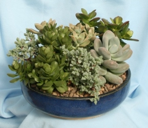 Succulent Low Bowl from Mischler's Florist and Greenhouses in Williamsville, NY