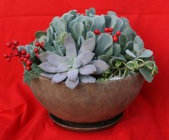 Succulent Holiday Bowl from Mischler's Florist and Greenhouses in Williamsville, NY