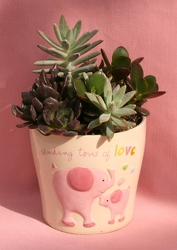 Succulents for New Baby Girl from Mischler's Florist and Greenhouses in Williamsville, NY