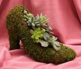 Succulent - Paula's Pump from Mischler's Florist and Greenhouses in Williamsville, NY