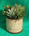 Succulents - For You from Mischler's Florist and Greenhouses in Williamsville, NY