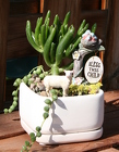 Mini Succulent New Beginning from Mischler's Florist and Greenhouses in Williamsville, NY