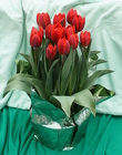 Tulips from Mischler's Florist and Greenhouses in Williamsville, NY