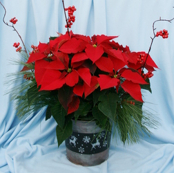 Winter Greetings from Mischler's Florist and Greenhouses in Williamsville, NY