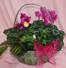 Large Cyclamen Basket Combo from Mischler's Florist and Greenhouses in Williamsville, NY