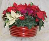 Poinsettia Large Tub Mixed Combo from Mischler's Florist and Greenhouses in Williamsville, NY