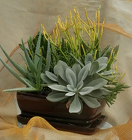 "Succulent 8"" Mixed Ceramic from Mischler's Florist and Greenhouses in Williamsville, NY"